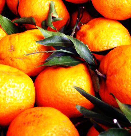 Mandarini sinistra